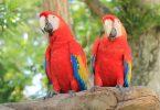 Comment apprendre a son perroquet a parle